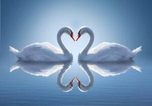 Κλασικά και αγαπημένα – Η Λίμνη των Κύκνων του Τσαϊκόφσκι