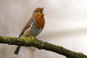 Άνοιξη: η φύση τραγουδά, η μουσική μιμείται!