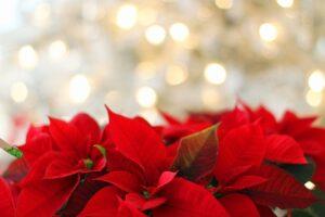 Χριστουγεννιάτικα τραγούδια – Κάλαντα Κέρκυρας