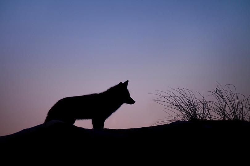 Κλασικά και αγαπημένα – Ο Πέτρος και ο Λύκος